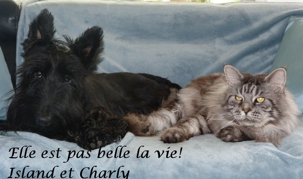 charly et island