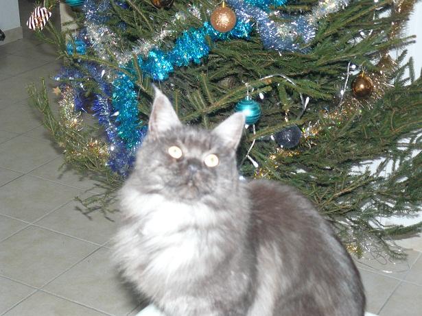Où est mon cadeau ?