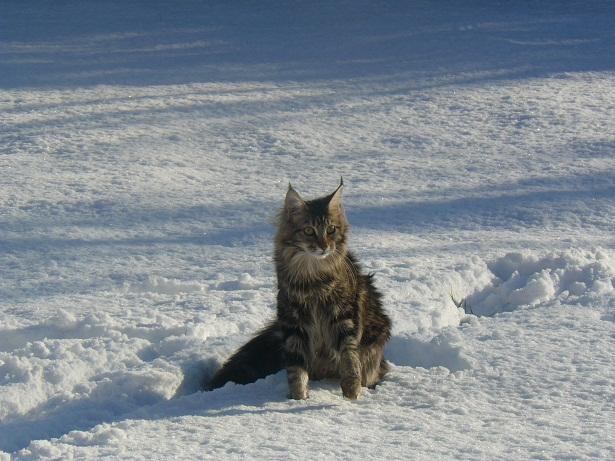 Mistery : reine des neiges
